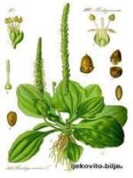 Боквица сируп